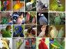 Makaronai, kakadučiai Afrikos rudieji ir derlingi kiaušiniai (1)