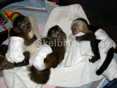 Beždžionių kūdikiai ir kiti primatai