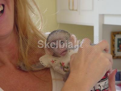 Kūdikių capuchin beždžionė
