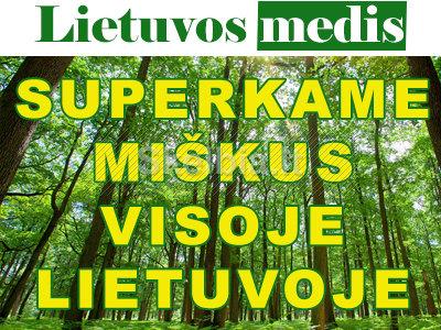 Brangiai perkame įvairaus amžiaus miškus